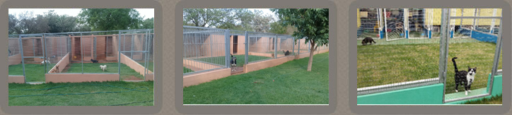 Snowpine Kennels & Catter superb facilities and staff